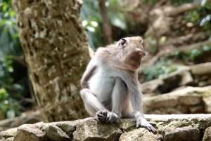 monkey sanctuary Ubud Bali-asia