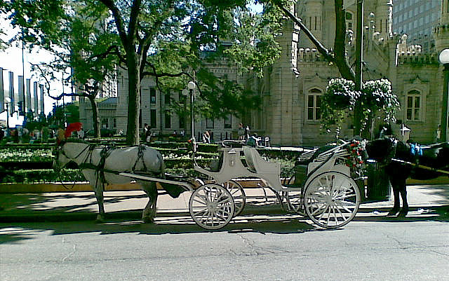 chicago-carriage-ride