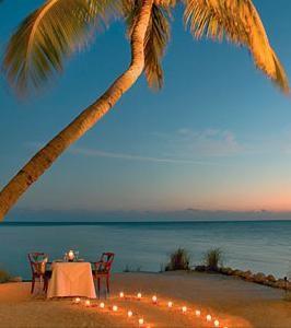 florida-keys-palm