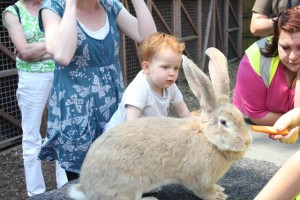 Center-Parcs-Elvedon-petting-zoo