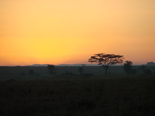 safari-dawn