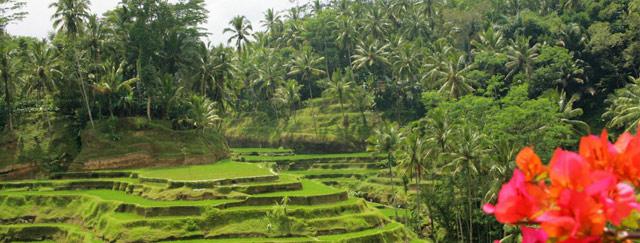 Indonesia-3-640