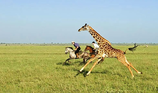 luxury-riding-safari-1