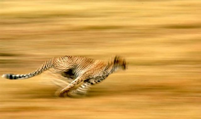 serengetti-safaris-animals