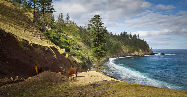 ball-bay-norfolk-island