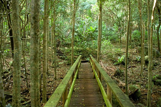 norfolk-island-Botanic-Gardens