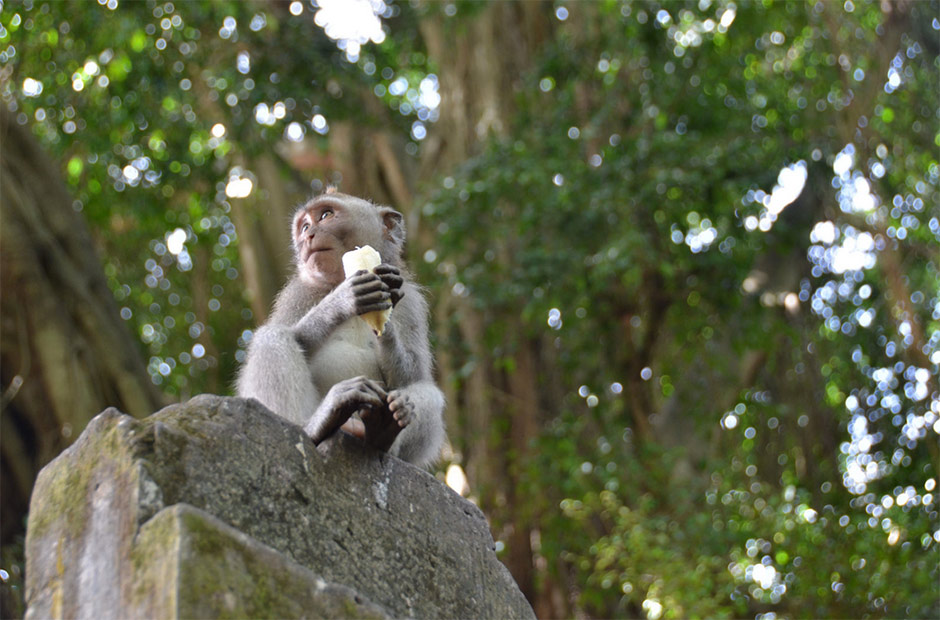ubud-monkey-sanctuary
