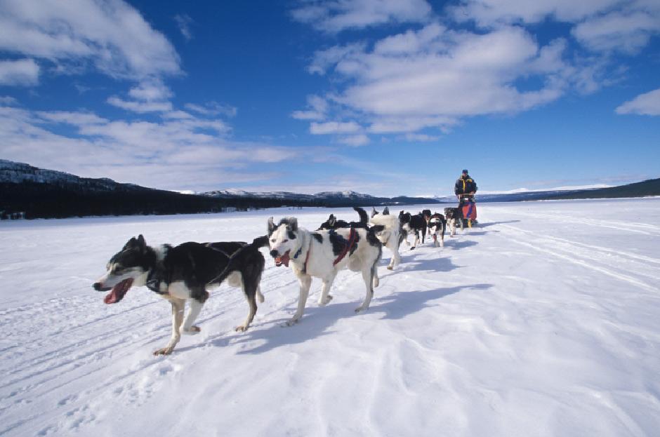 dog-sleding-arctic
