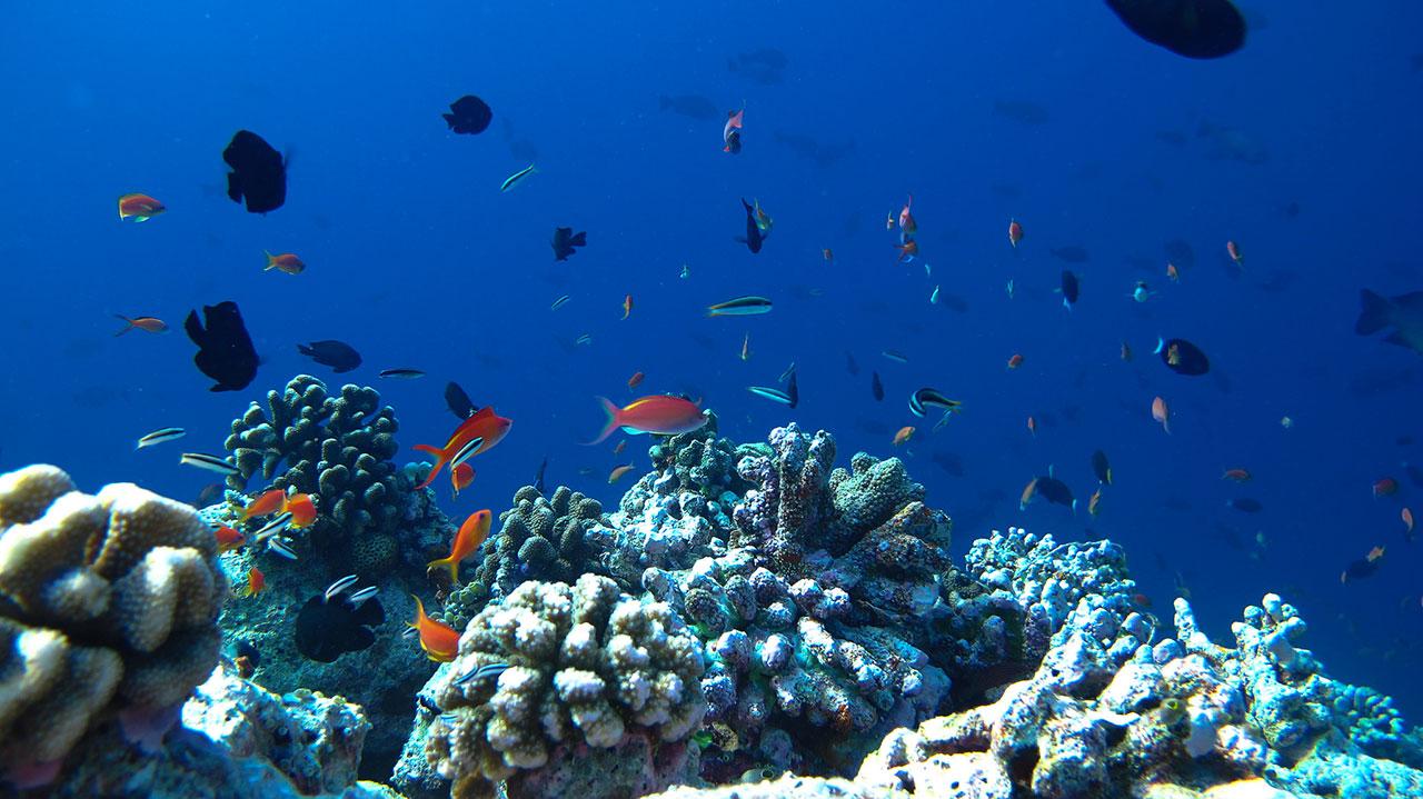 maldives-ocean-scuba-diving