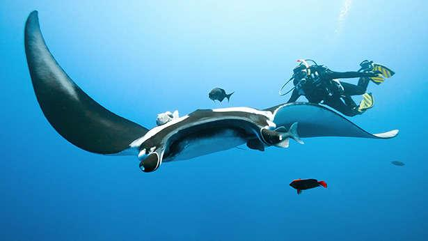 manta-ray-shinaria-beach-greece-scuba-dive-site-640x360