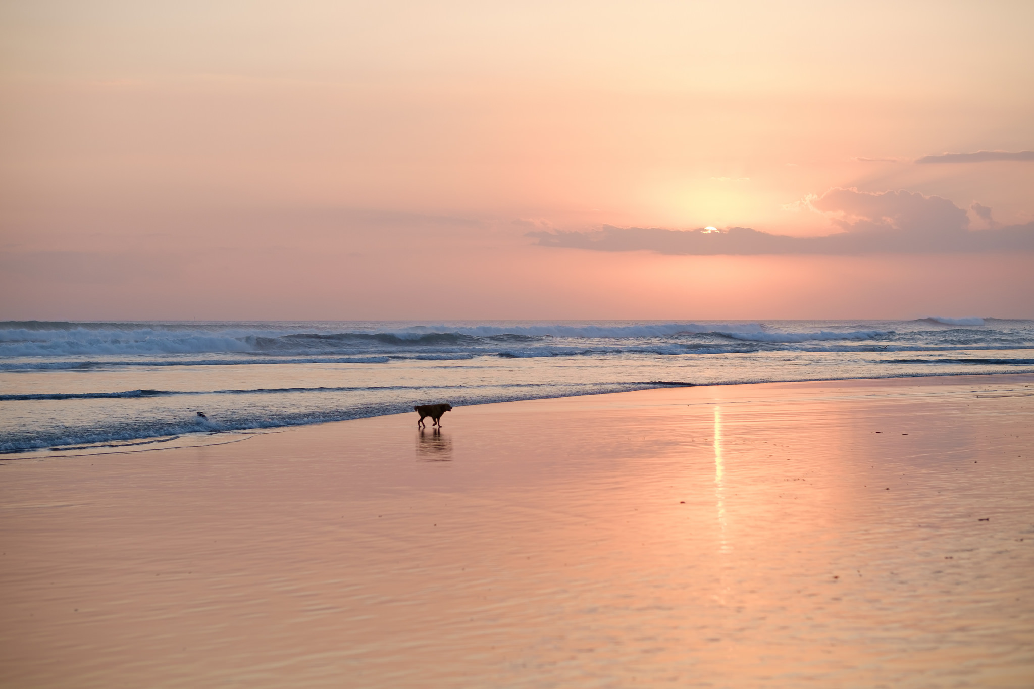 Dog on Kuta Beach | Luxury Travels | Luxury Travel Blog