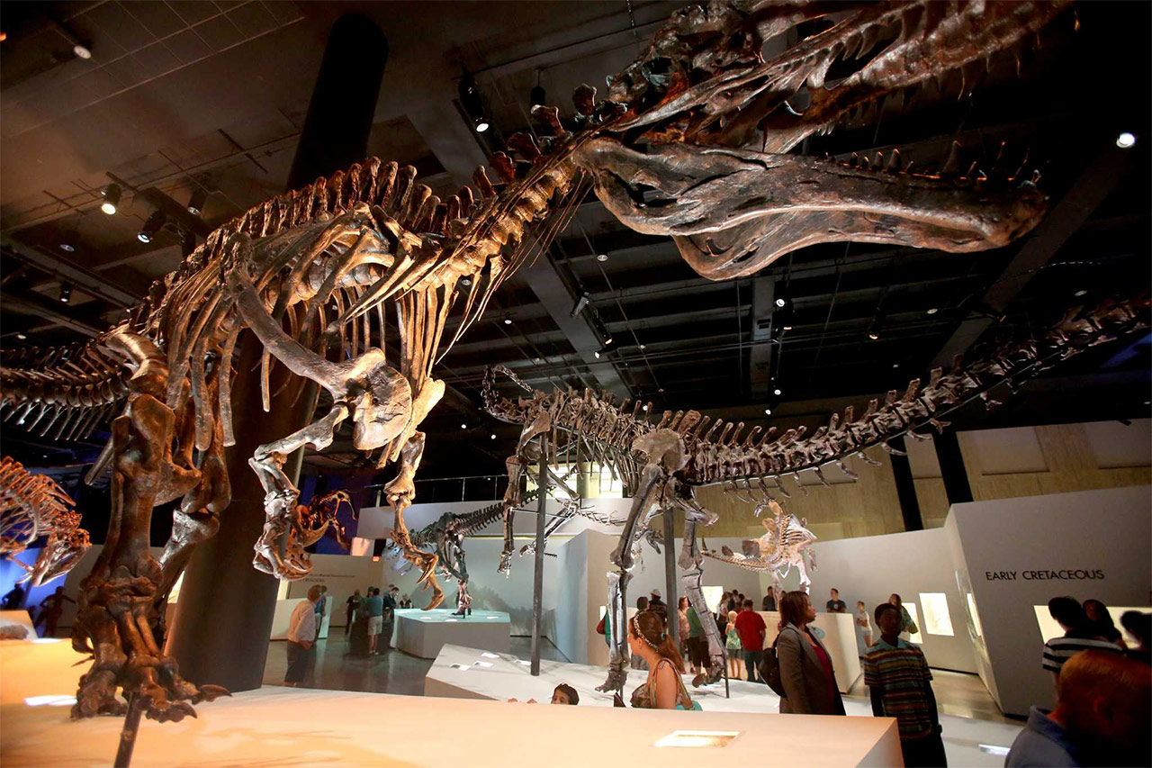 The-Houston-Museum-of-Natural-Science
