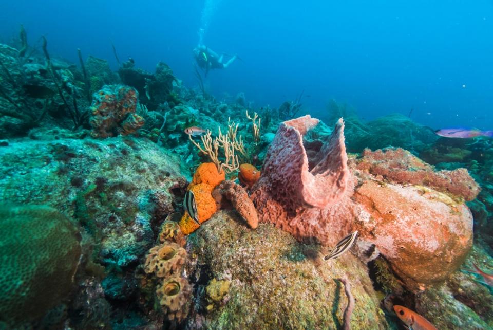 antigua-destination-guide-3-explore-coral-reefs-sm